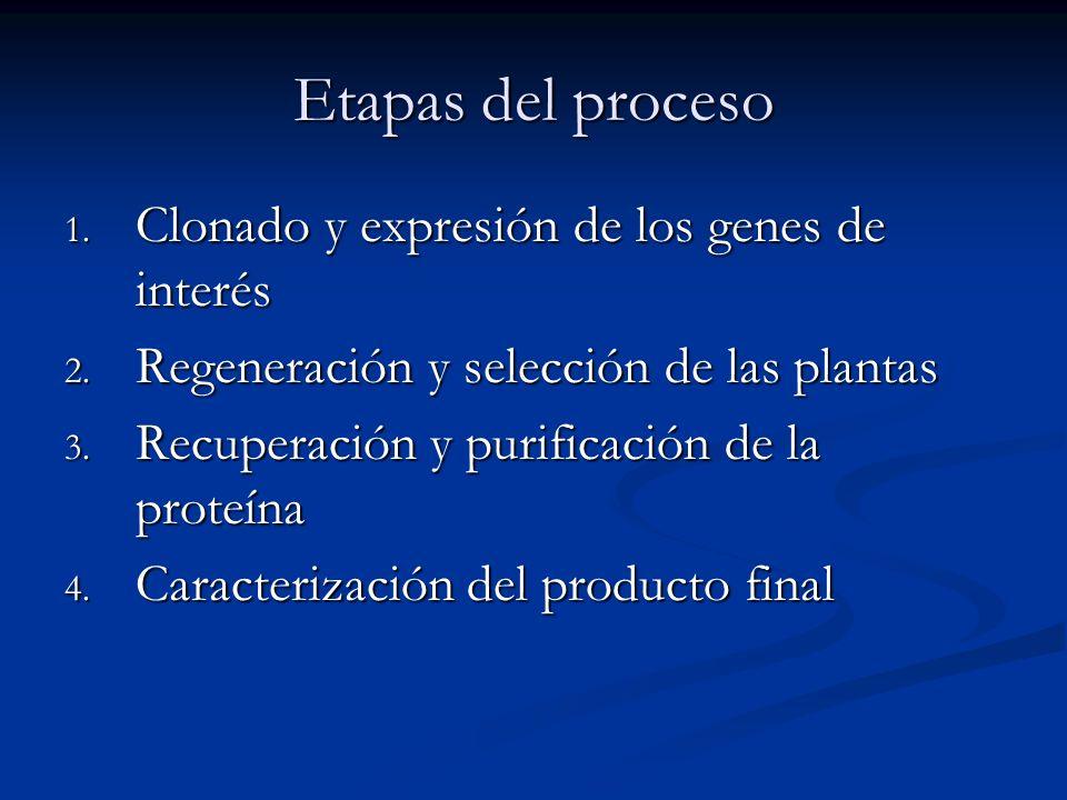 Etapas del proceso Clonado y expresión de los genes de interés