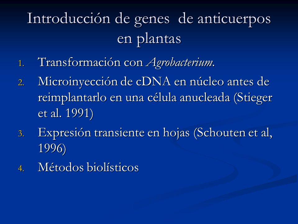 Introducción de genes de anticuerpos en plantas