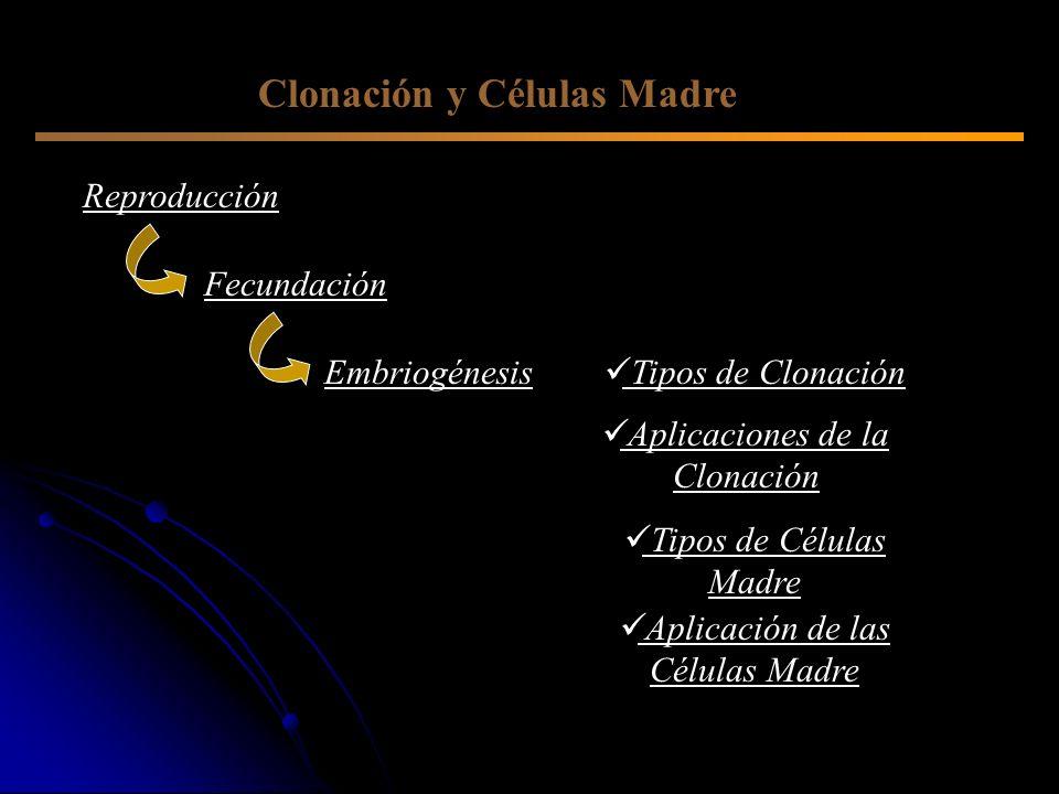Clonación y Células Madre
