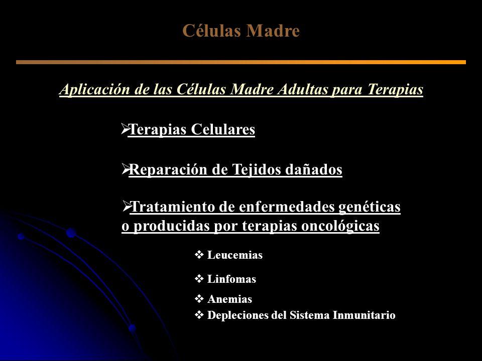 Aplicación de las Células Madre Adultas para Terapias