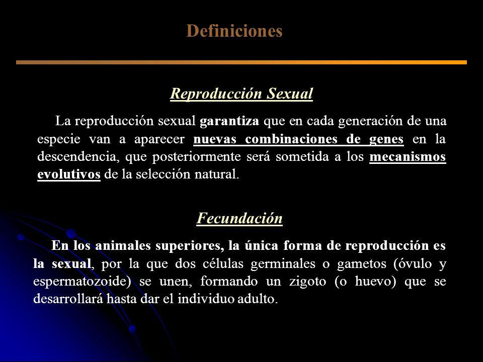 Definiciones Reproducción Sexual Fecundación