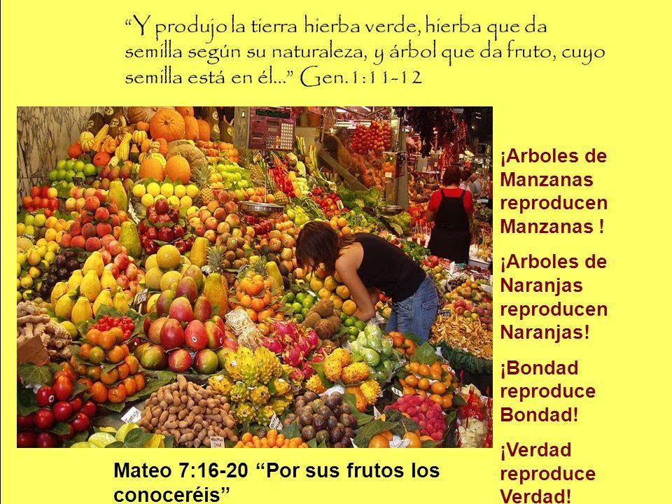 Y produjo la tierra hierba verde, hierba que da semilla según su naturaleza, y árbol que da fruto, cuyo semilla está en él… Gen.1:11-12