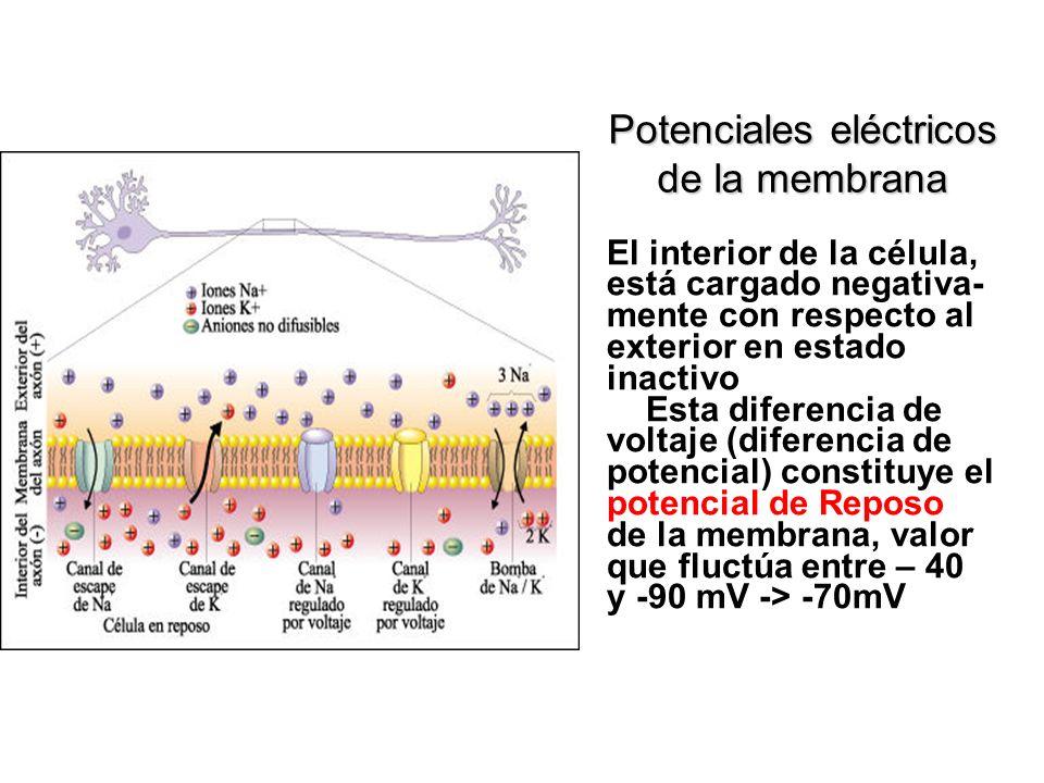 Potenciales eléctricos de la membrana
