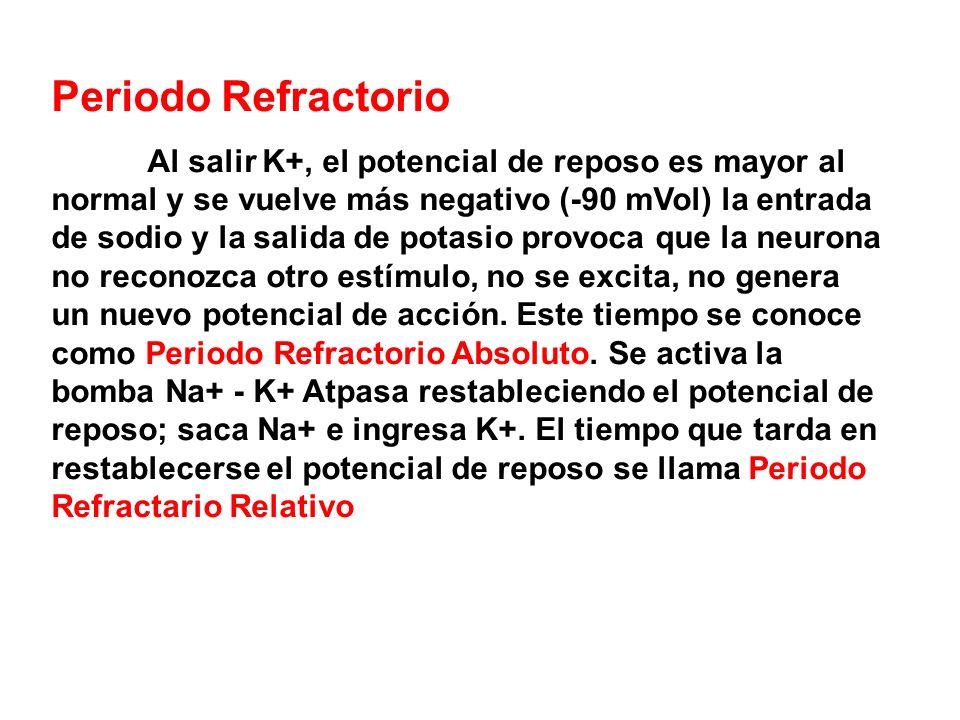 Periodo Refractorio