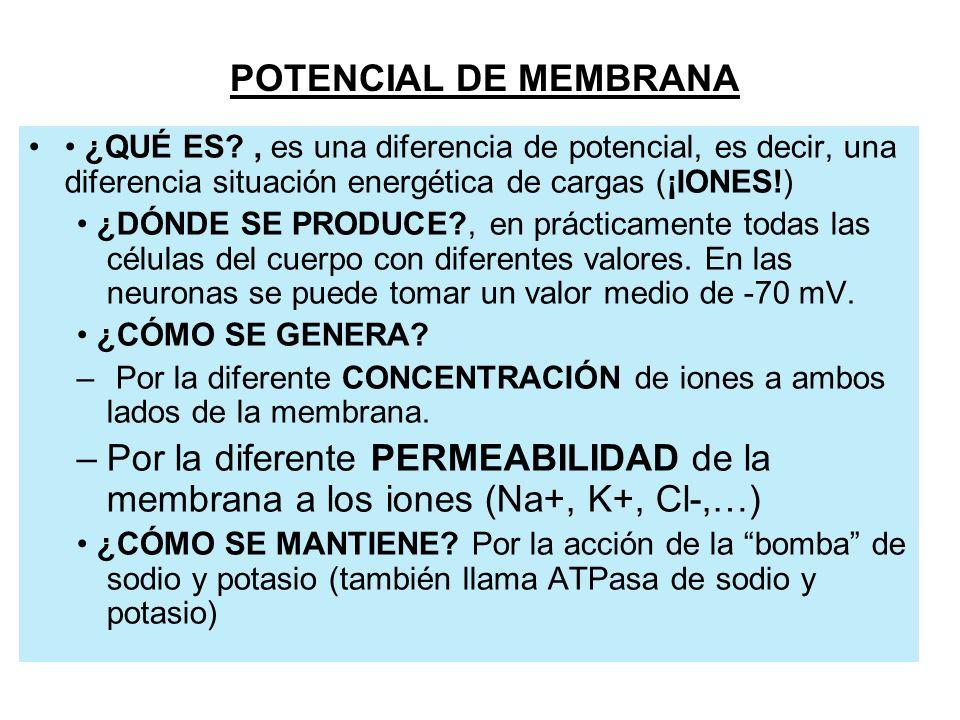 POTENCIAL DE MEMBRANA • ¿QUÉ ES , es una diferencia de potencial, es decir, una diferencia situación energética de cargas (¡IONES!)