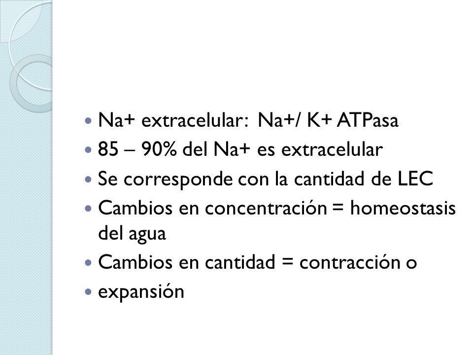 Na+ extracelular: Na+/ K+ ATPasa