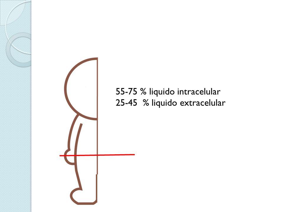 55-75 % liquido intracelular