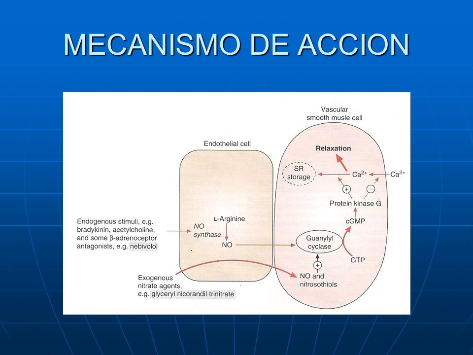 Ca ++ Antagonistas -Vasodilatadores - ppt video online