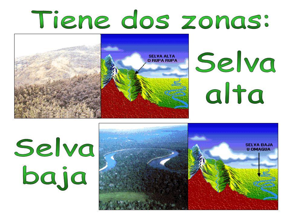 Tiene dos zonas: Selva alta Selva baja