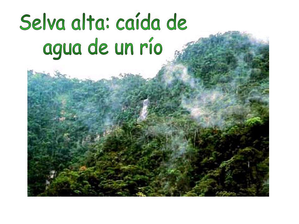 Selva alta: caída de agua de un río