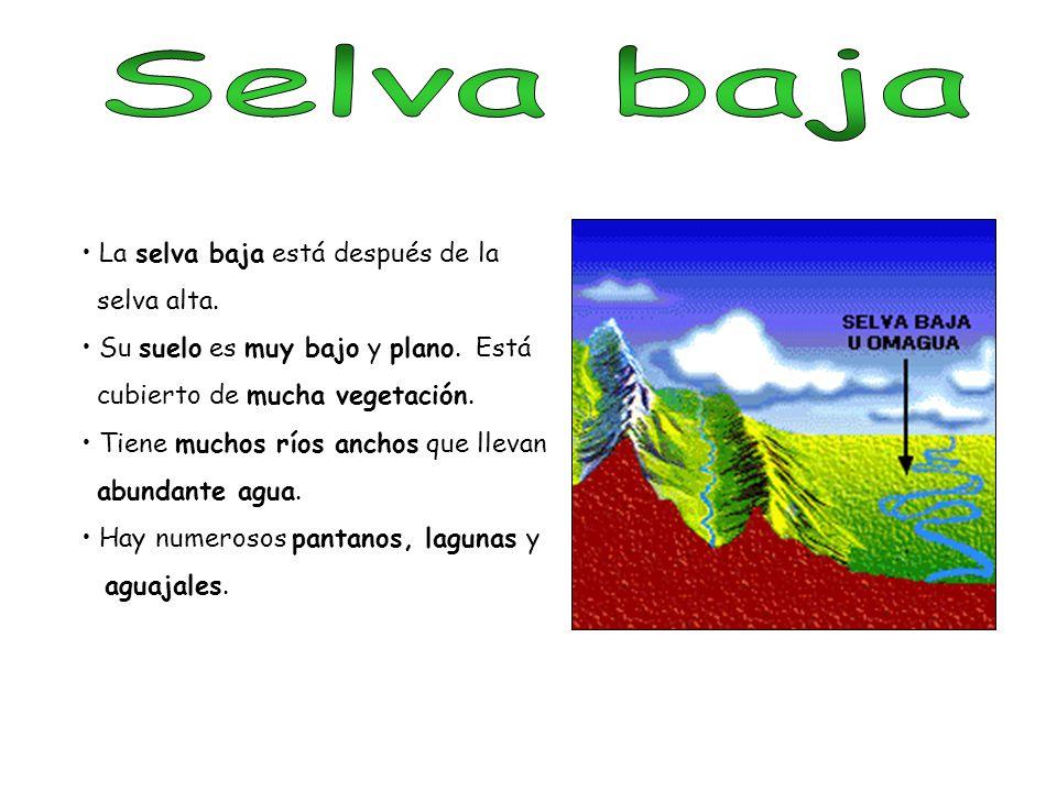 Selva baja La selva baja está después de la selva alta.