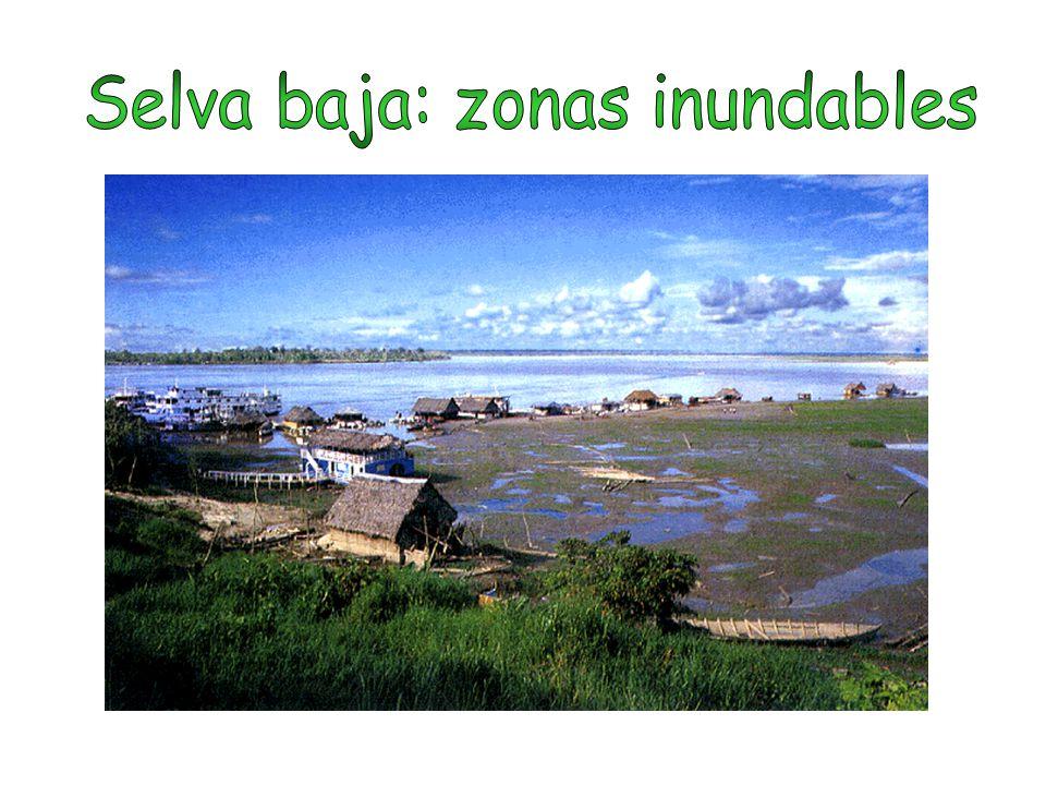Selva baja: zonas inundables