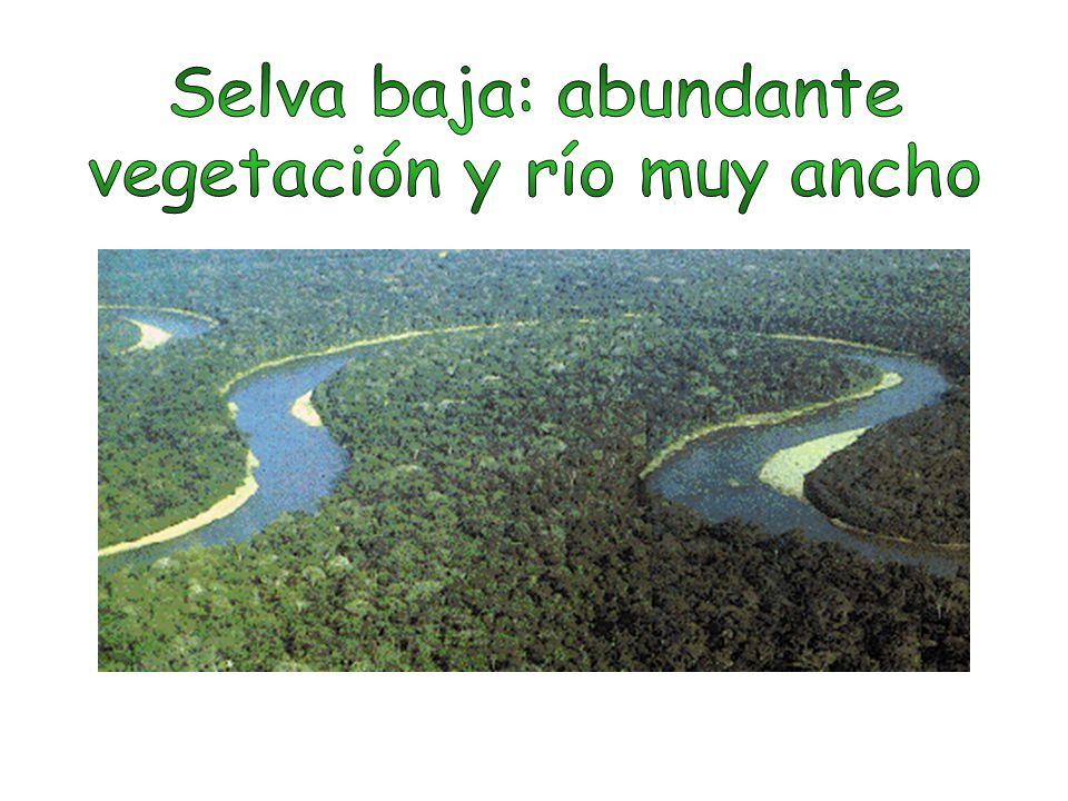 vegetación y río muy ancho