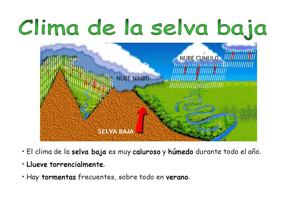 Clima de la selva baja El clima de la selva baja es muy caluroso y húmedo durante todo el año. Llueve torrencialmente.