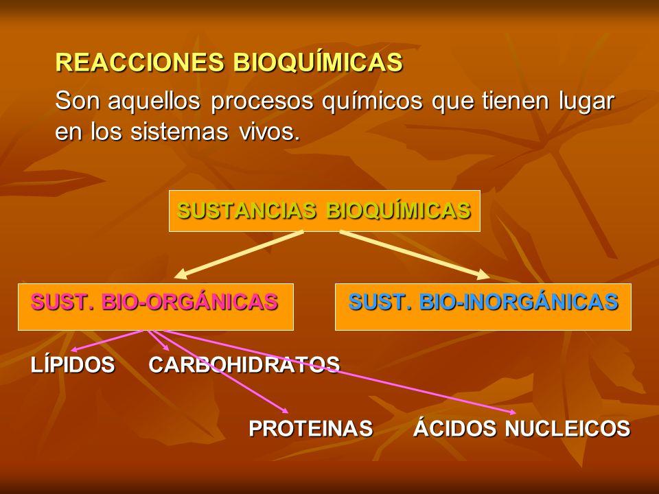 procesos catabolicos y anabolicos wikipedia
