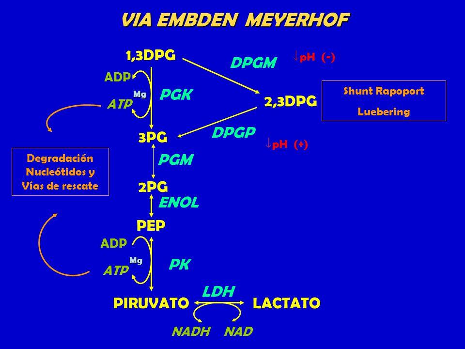 Degradación Nucleótidos y Vías de rescate