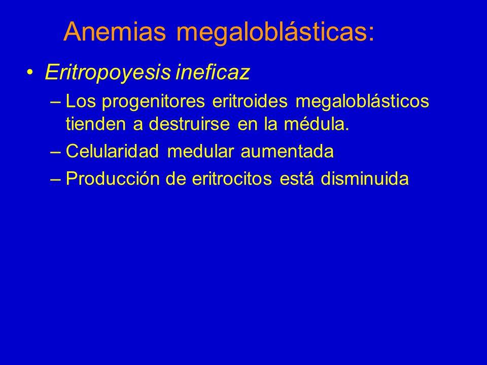Anemias megaloblásticas: