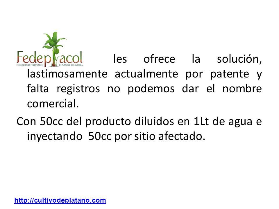 FEDEPLACOL les ofrece la solución, lastimosamente actualmente por patente y falta registros no podemos dar el nombre comercial. Con 50cc del producto diluidos en 1Lt de agua e inyectando 50cc por sitio afectado.