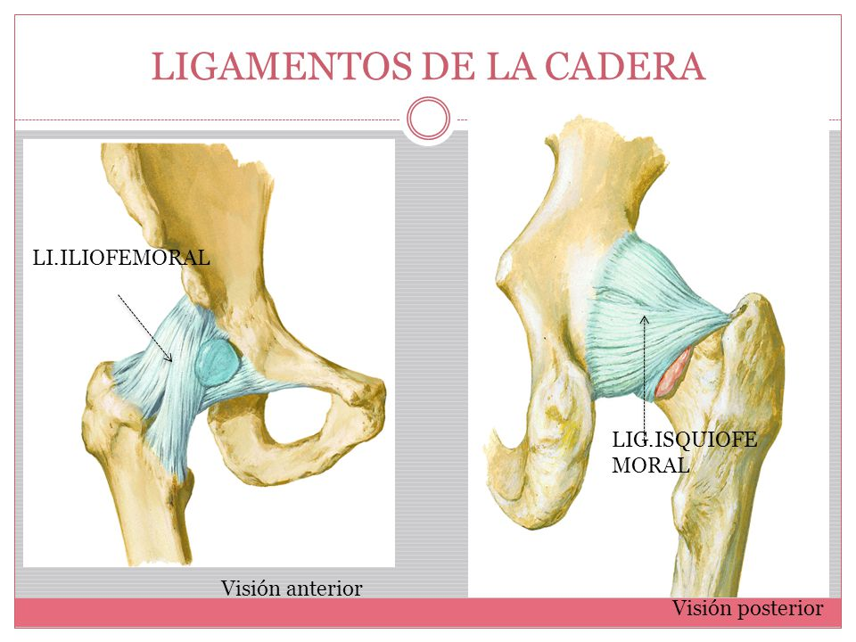 Contemporáneo Anatomía De Los Tendones Y Ligamentos De La Cadera ...