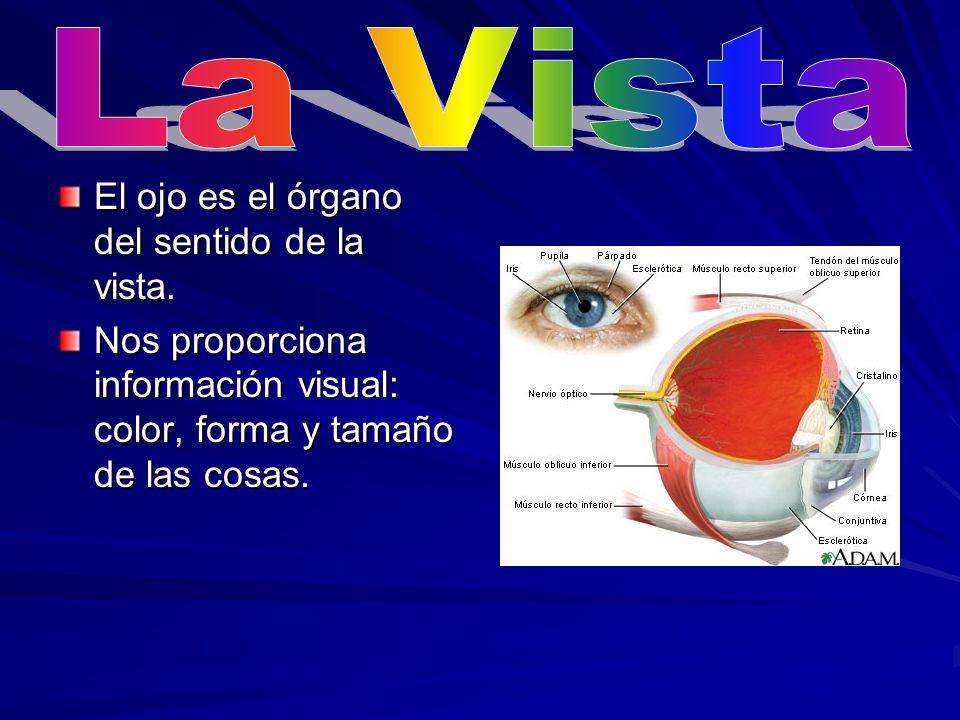 La Vista El ojo es el órgano del sentido de la vista.