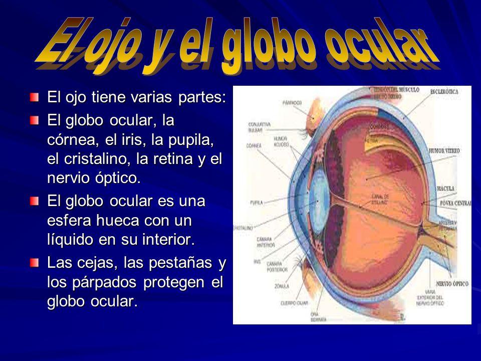 El ojo y el globo ocular El ojo tiene varias partes:
