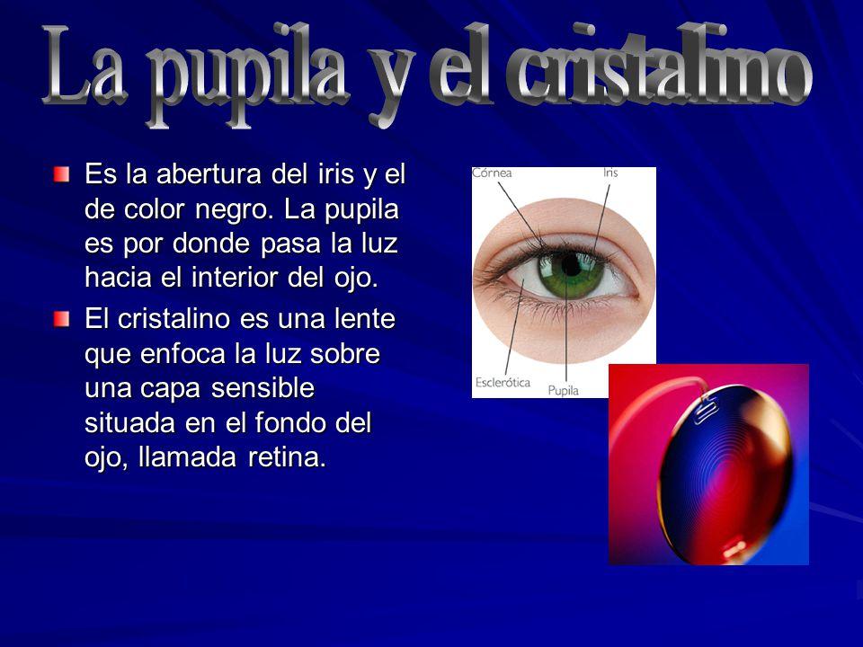 La pupila y el cristalino