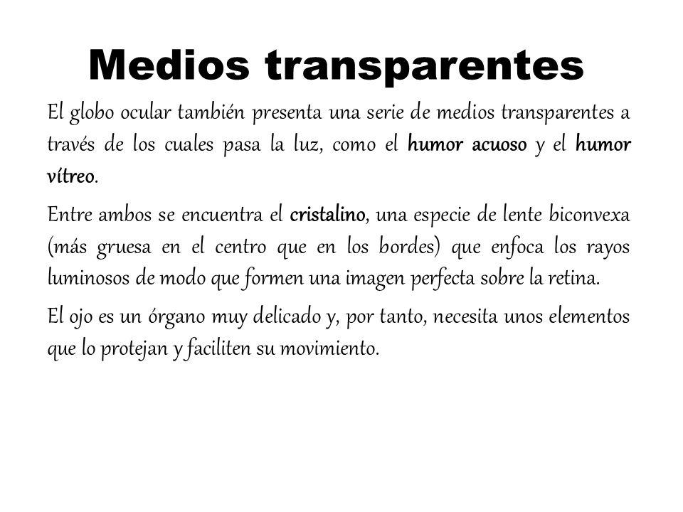 Cuales Son Los Organos Anexos Del Sentido De La Vista - Riftebelcock1971