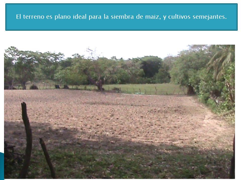 El terreno es plano ideal para la siembra de maiz, y cultivos semejantes.