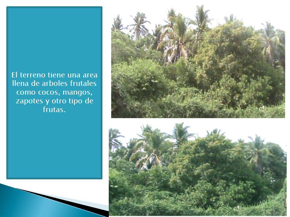 El terreno tiene una area llena de arboles frutales como cocos, mangos, zapotes y otro tipo de frutas.