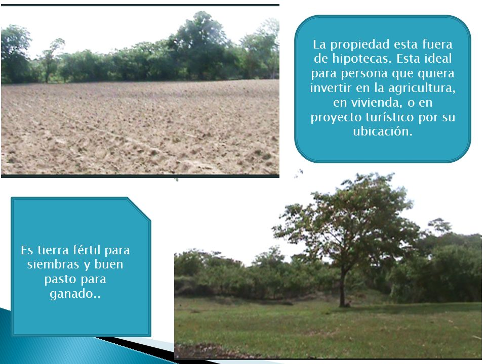 Es tierra fértil para siembras y buen pasto para ganado..