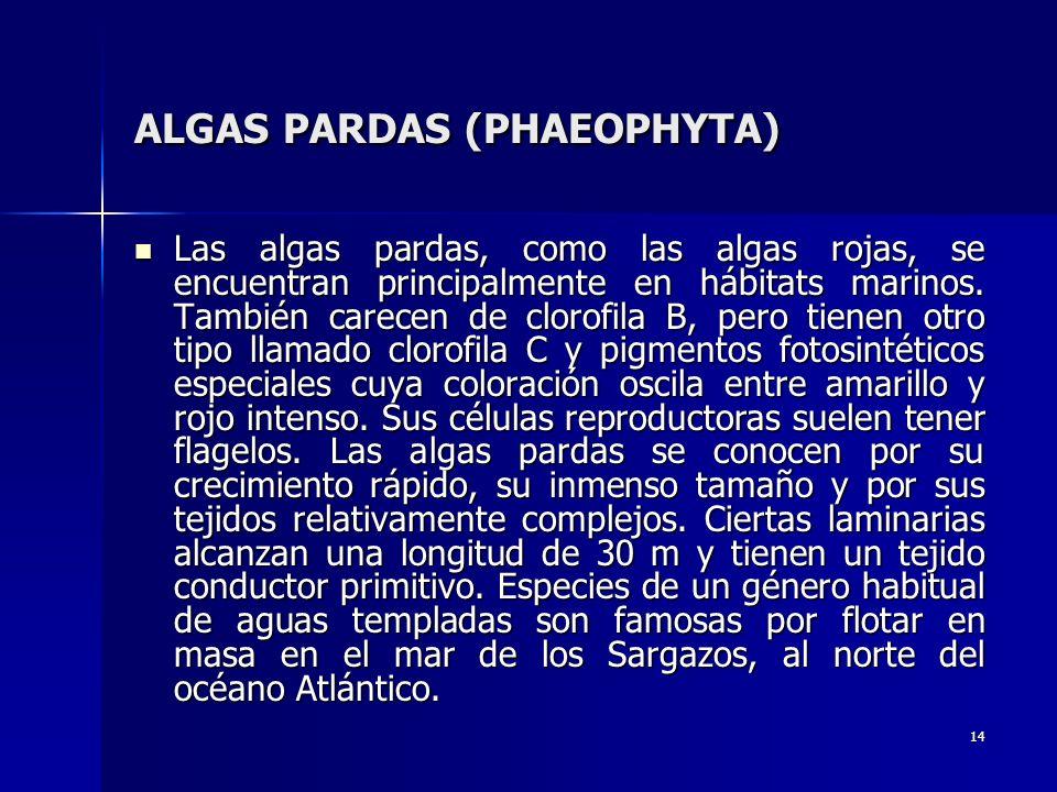 ALGAS PARDAS (PHAEOPHYTA)