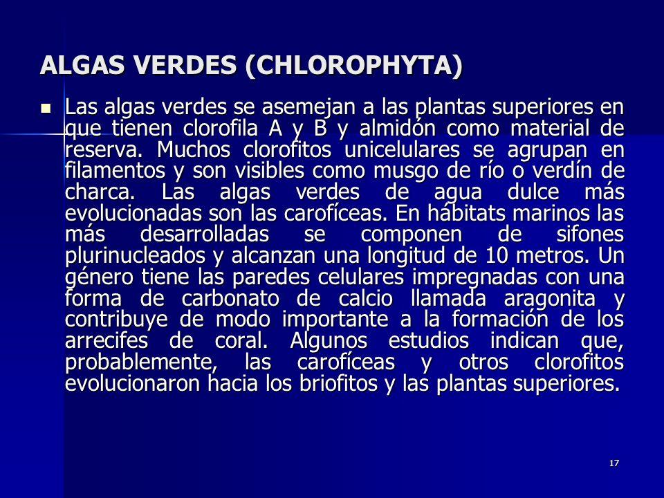ALGAS VERDES (CHLOROPHYTA)
