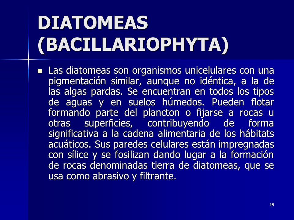 DIATOMEAS (BACILLARIOPHYTA)