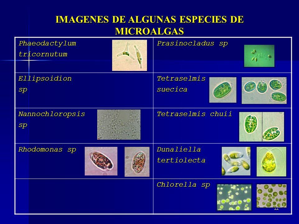 IMAGENES DE ALGUNAS ESPECIES DE
