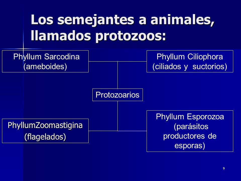 Los semejantes a animales, llamados protozoos:
