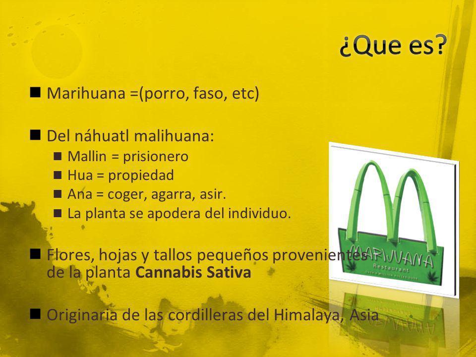 ¿Que es Marihuana =(porro, faso, etc) Del náhuatl malihuana: