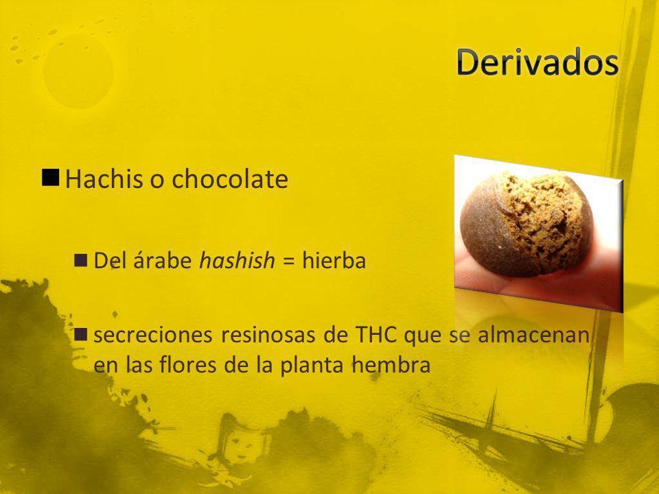Derivados Hachis o chocolate Del árabe hashish = hierba