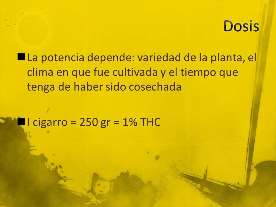 Dosis La potencia depende: variedad de la planta, el clima en que fue cultivada y el tiempo que tenga de haber sido cosechada.