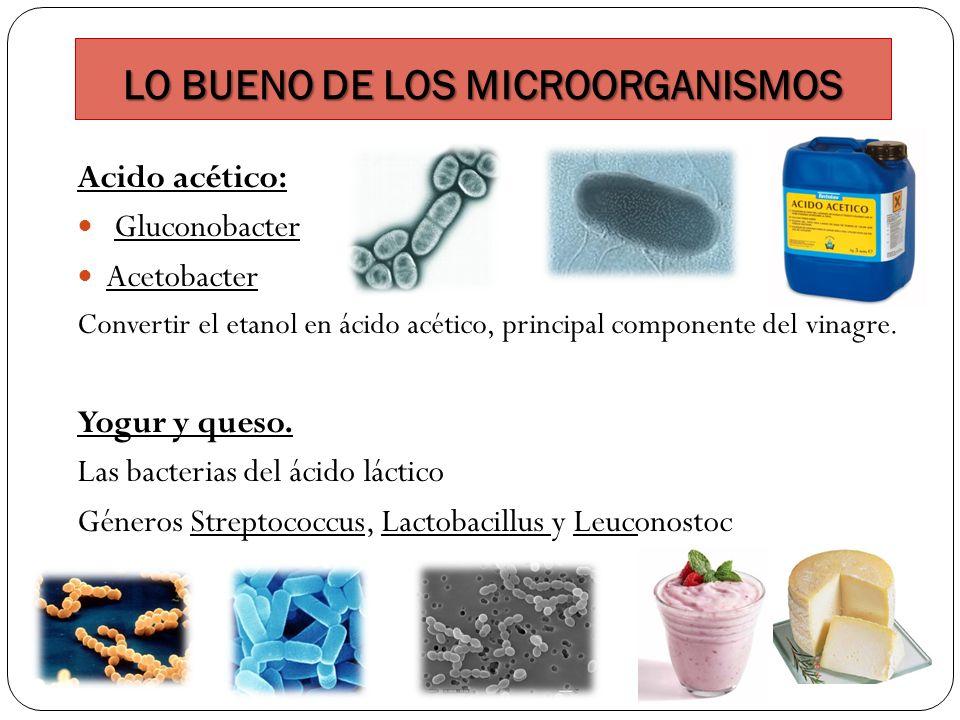 LO BUENO DE LOS MICROORGANISMOS
