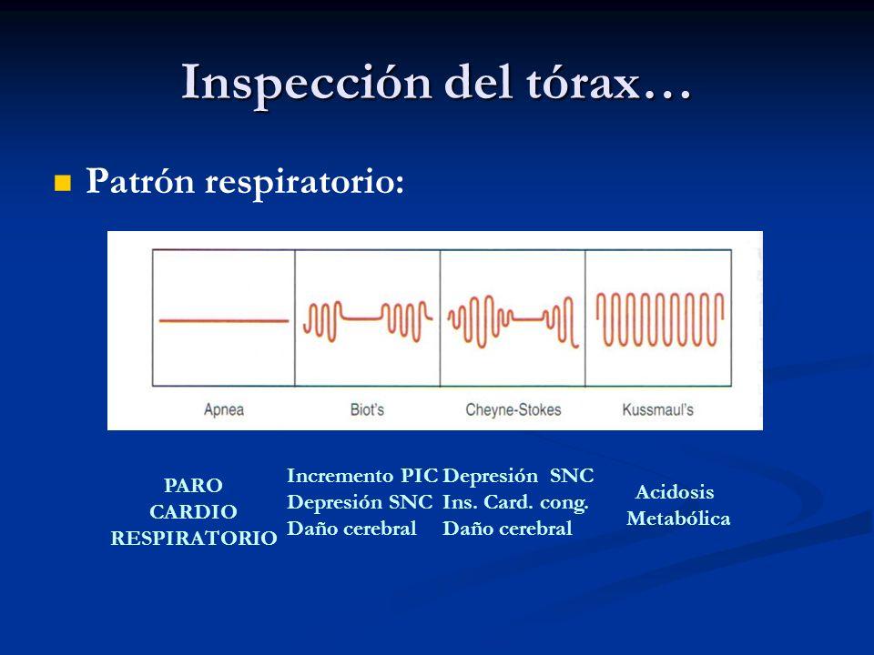 Inspección del tórax… Patrón respiratorio: