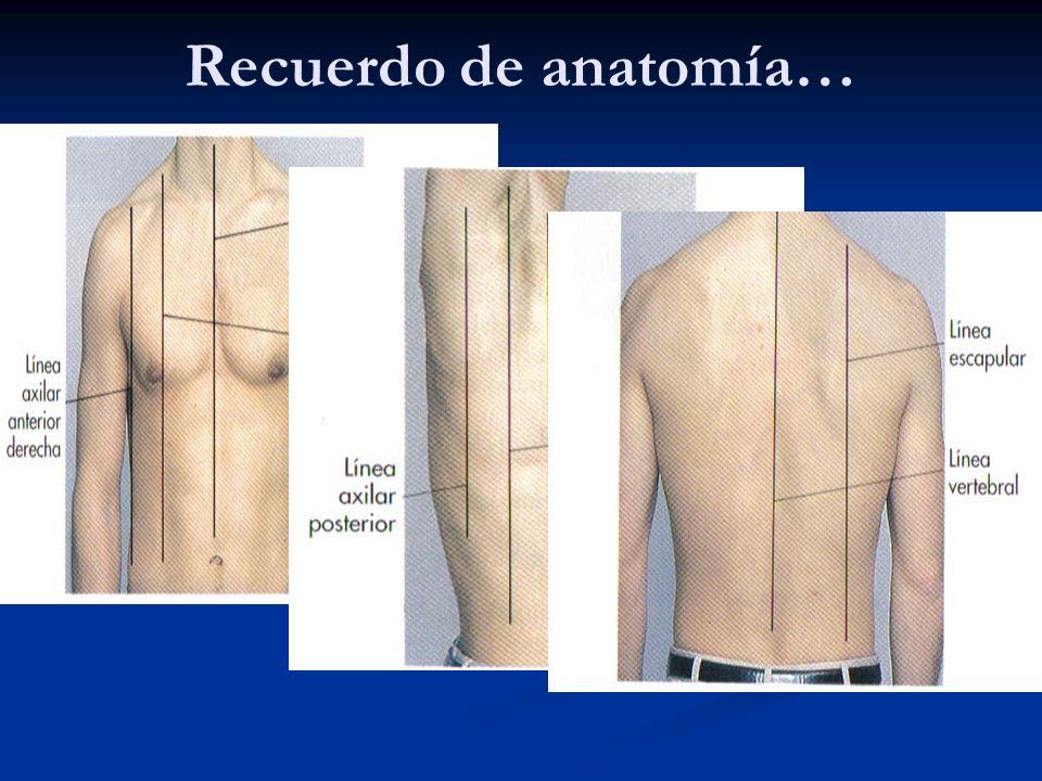 Recuerdo de anatomía…