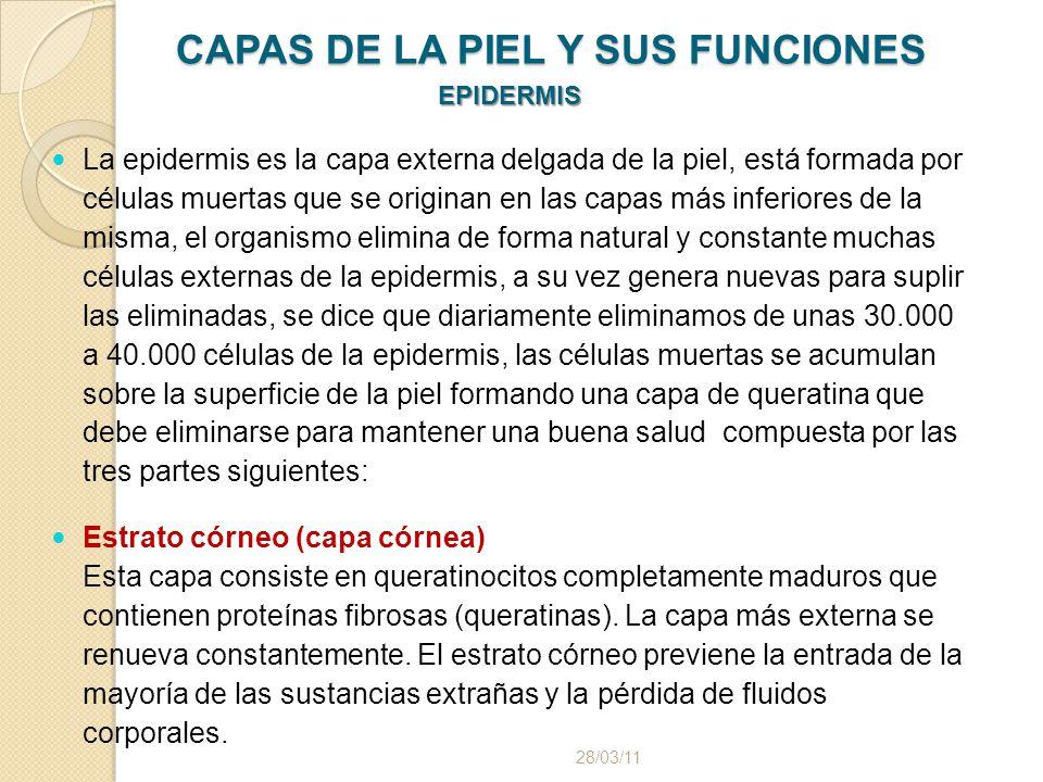 CAPAS DE LA PIEL Y SUS FUNCIONES