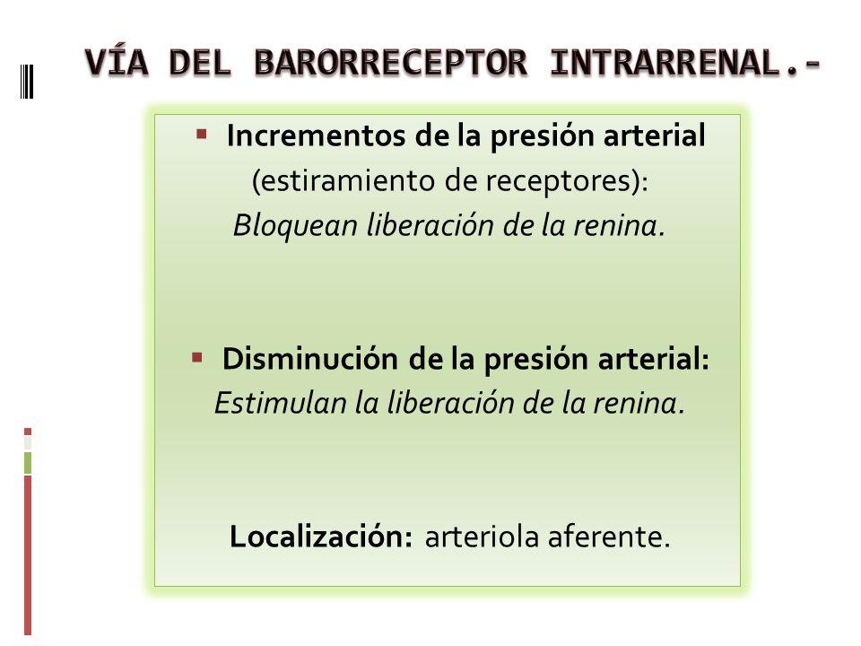 VÍA DEL BARORRECEPTOR INTRARRENAL.-