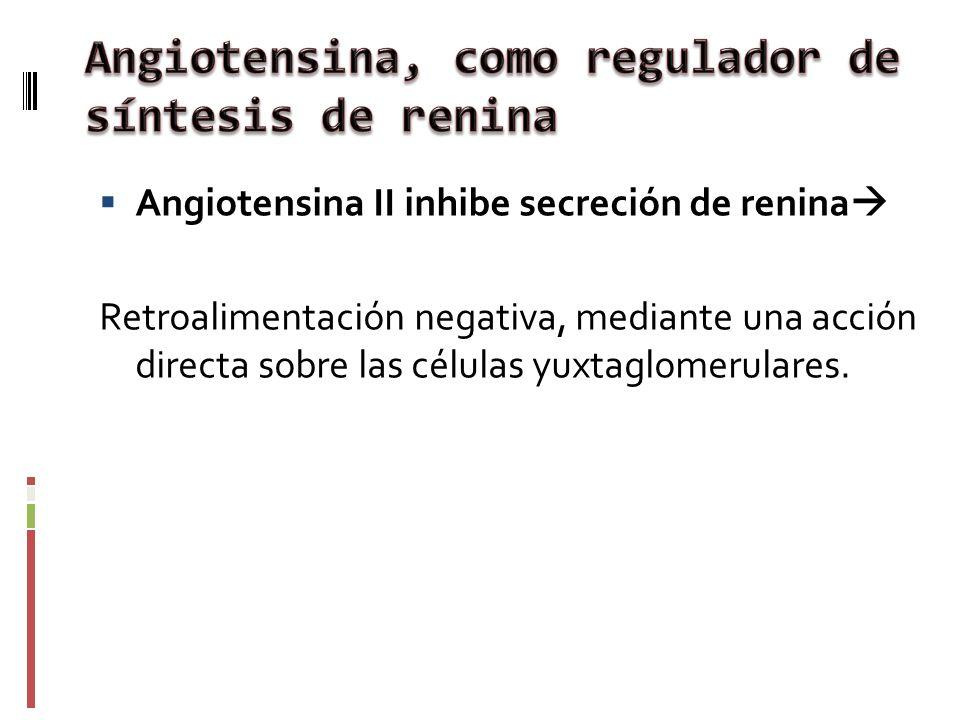 Angiotensina, como regulador de síntesis de renina
