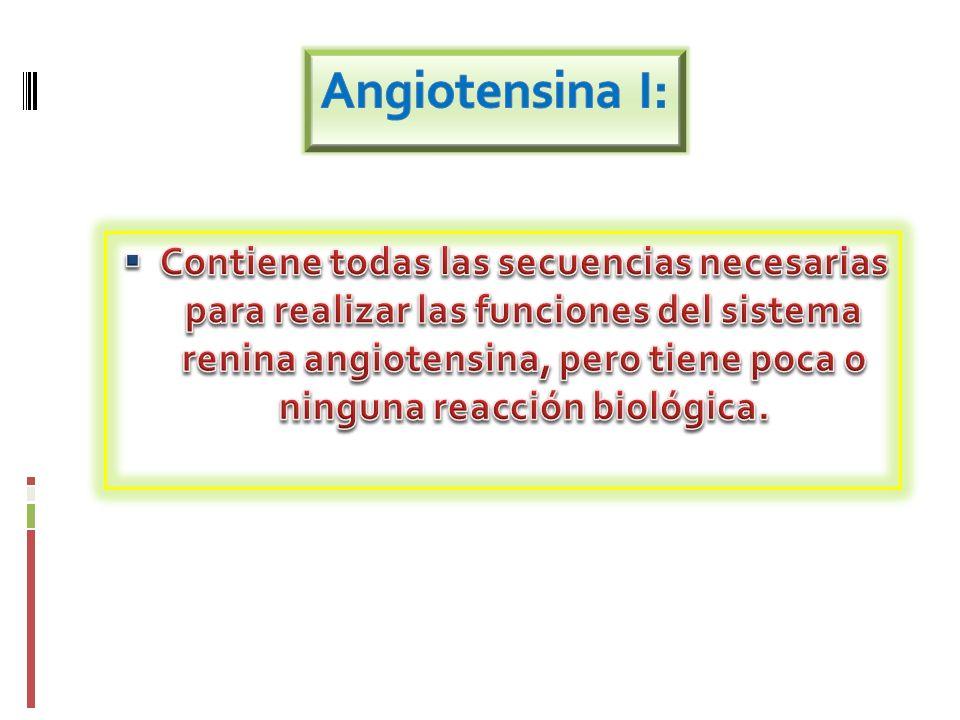 Angiotensina I: