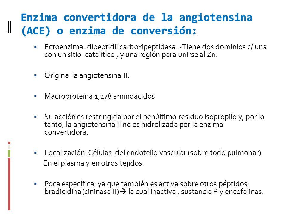 Enzima convertidora de la angiotensina (ACE) o enzima de conversión: