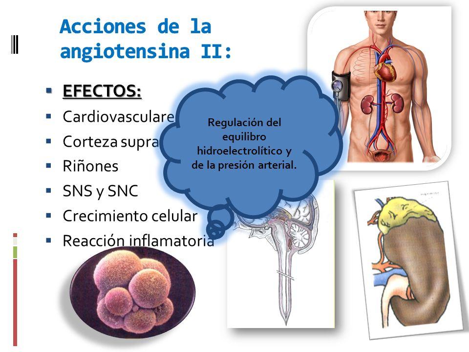 Acciones de la angiotensina II:
