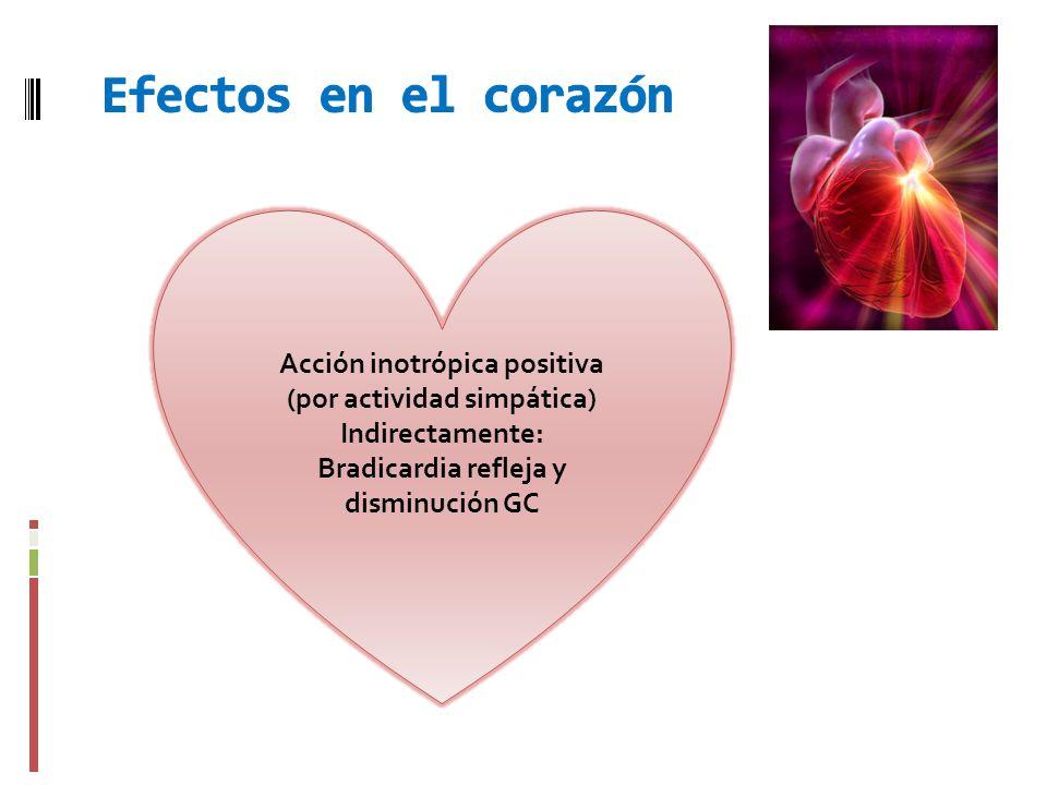 Efectos en el corazón Acción inotrópica positiva (por actividad simpática) Indirectamente: Bradicardia refleja y disminución GC.
