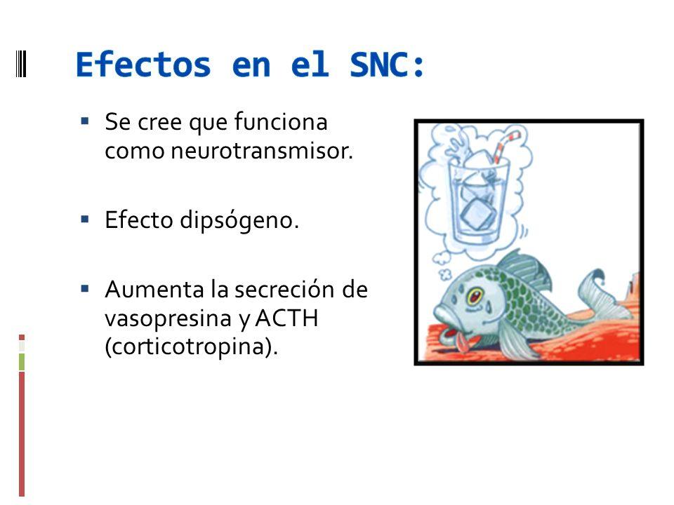 Efectos en el SNC: Se cree que funciona como neurotransmisor.