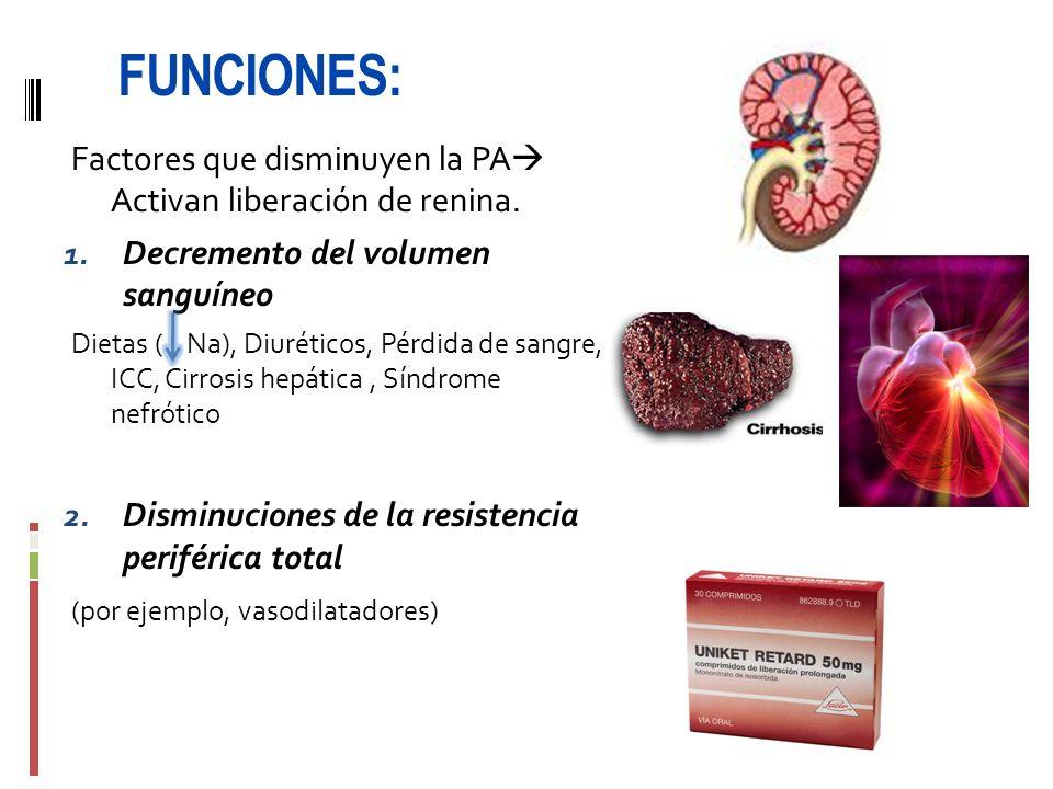FUNCIONES: Factores que disminuyen la PA Activan liberación de renina. Decremento del volumen sanguíneo.